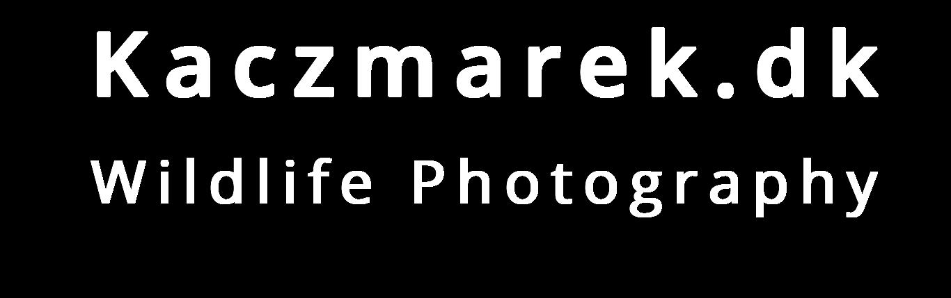 Kaczmarek.dk